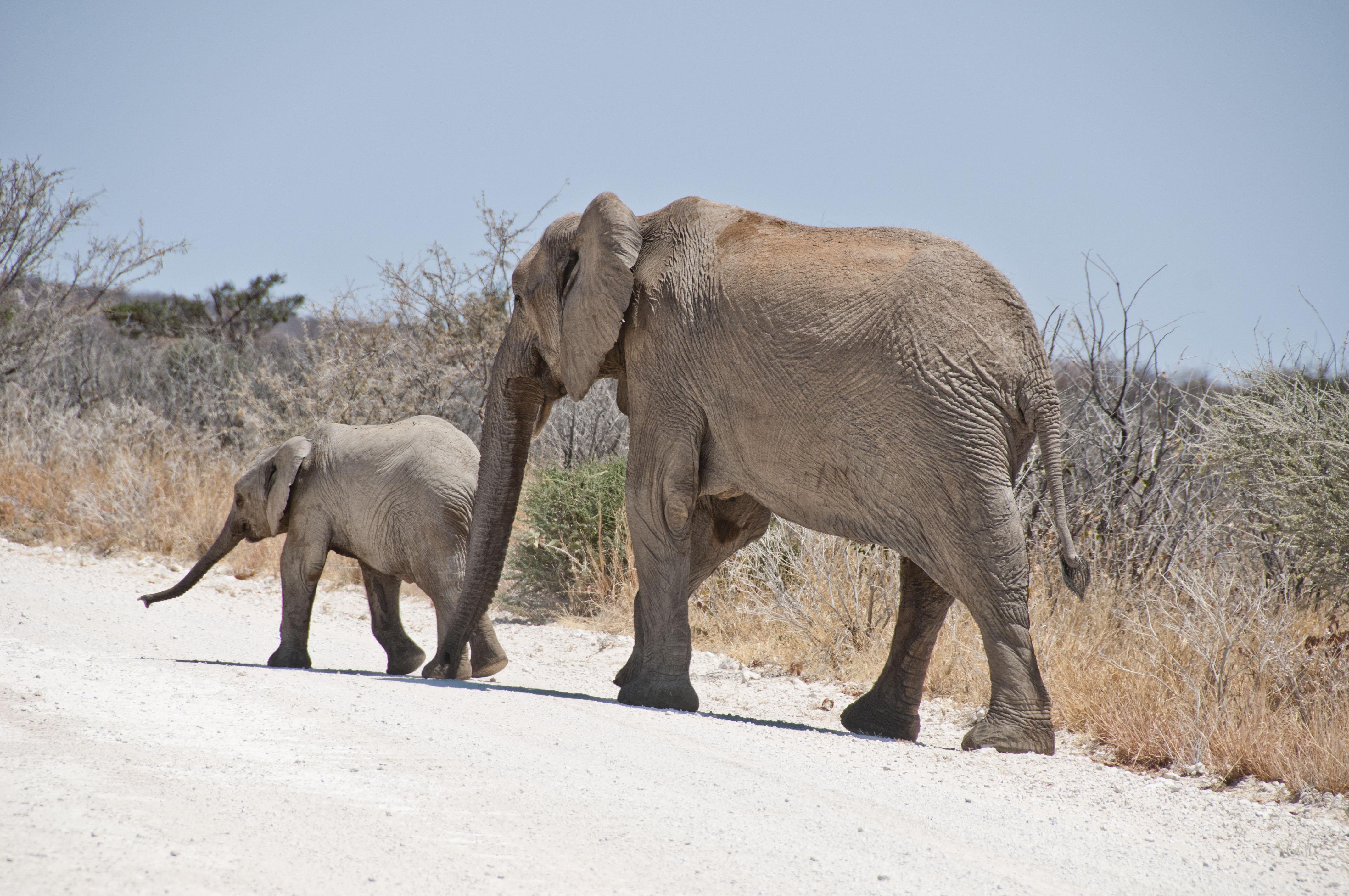namibia_2014_kaokoveld-etoscha_063