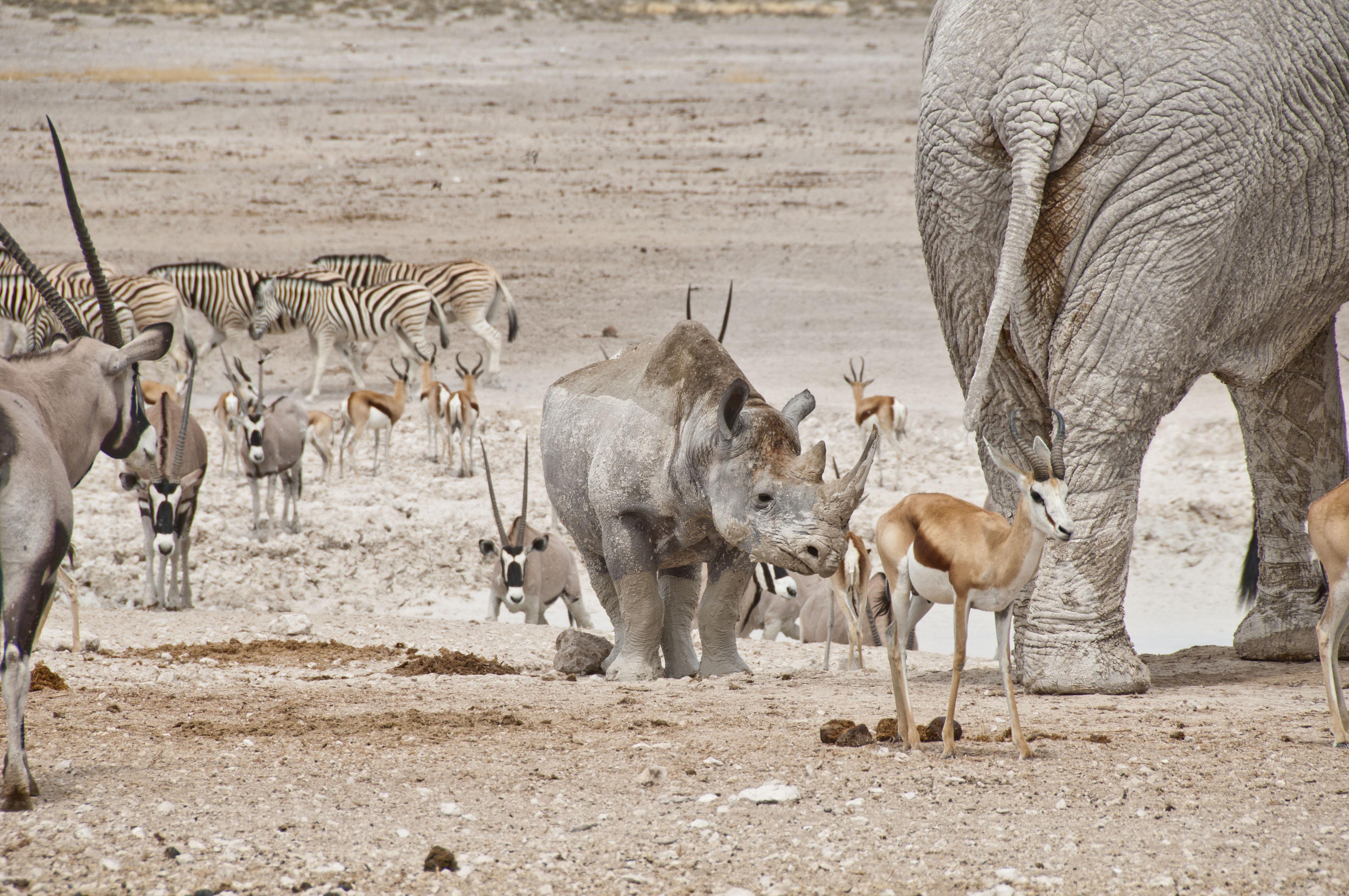 namibia_2014_kaokoveld-etoscha_083