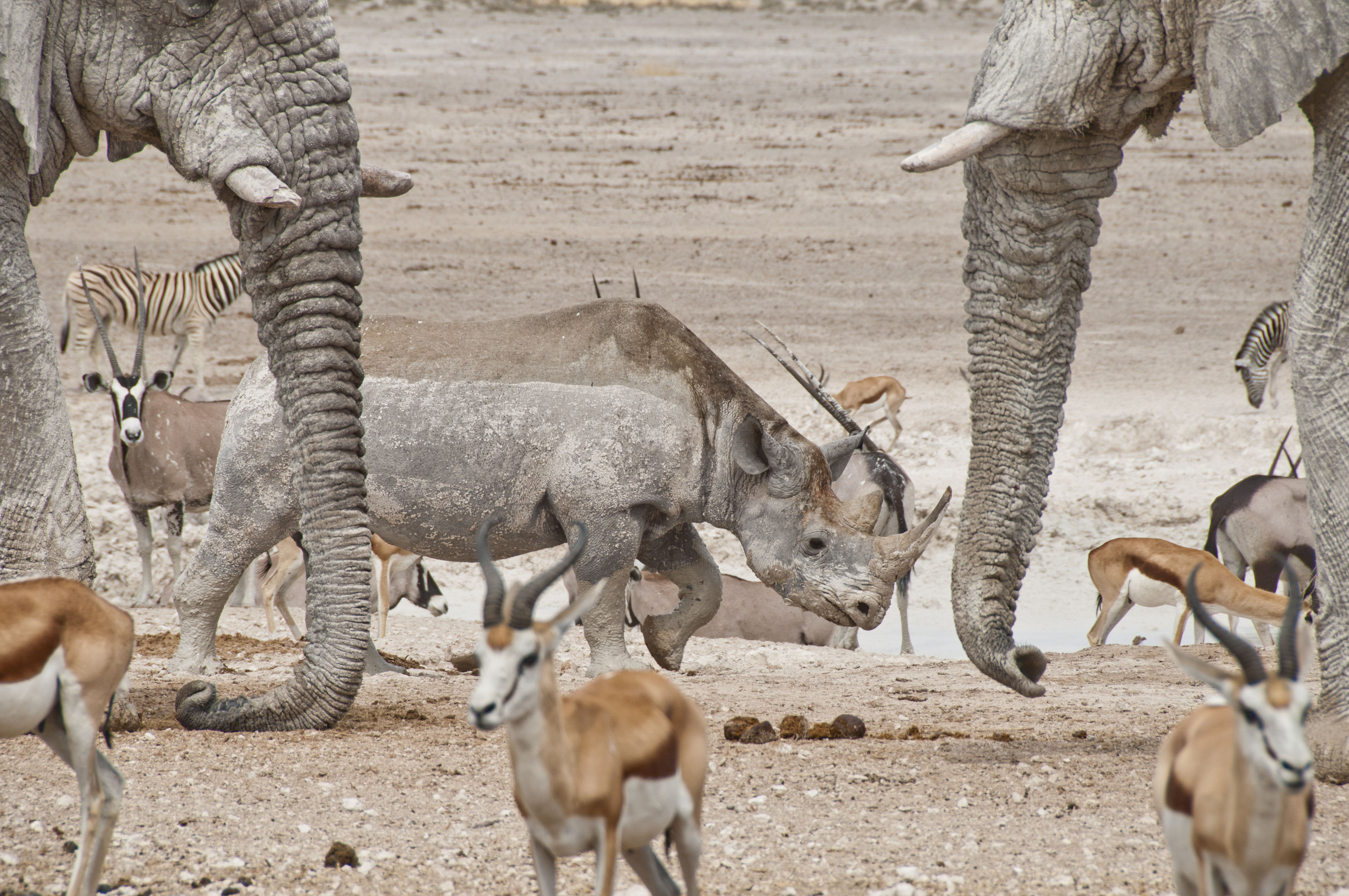 namibia_2014_kaokoveld-etoscha_085