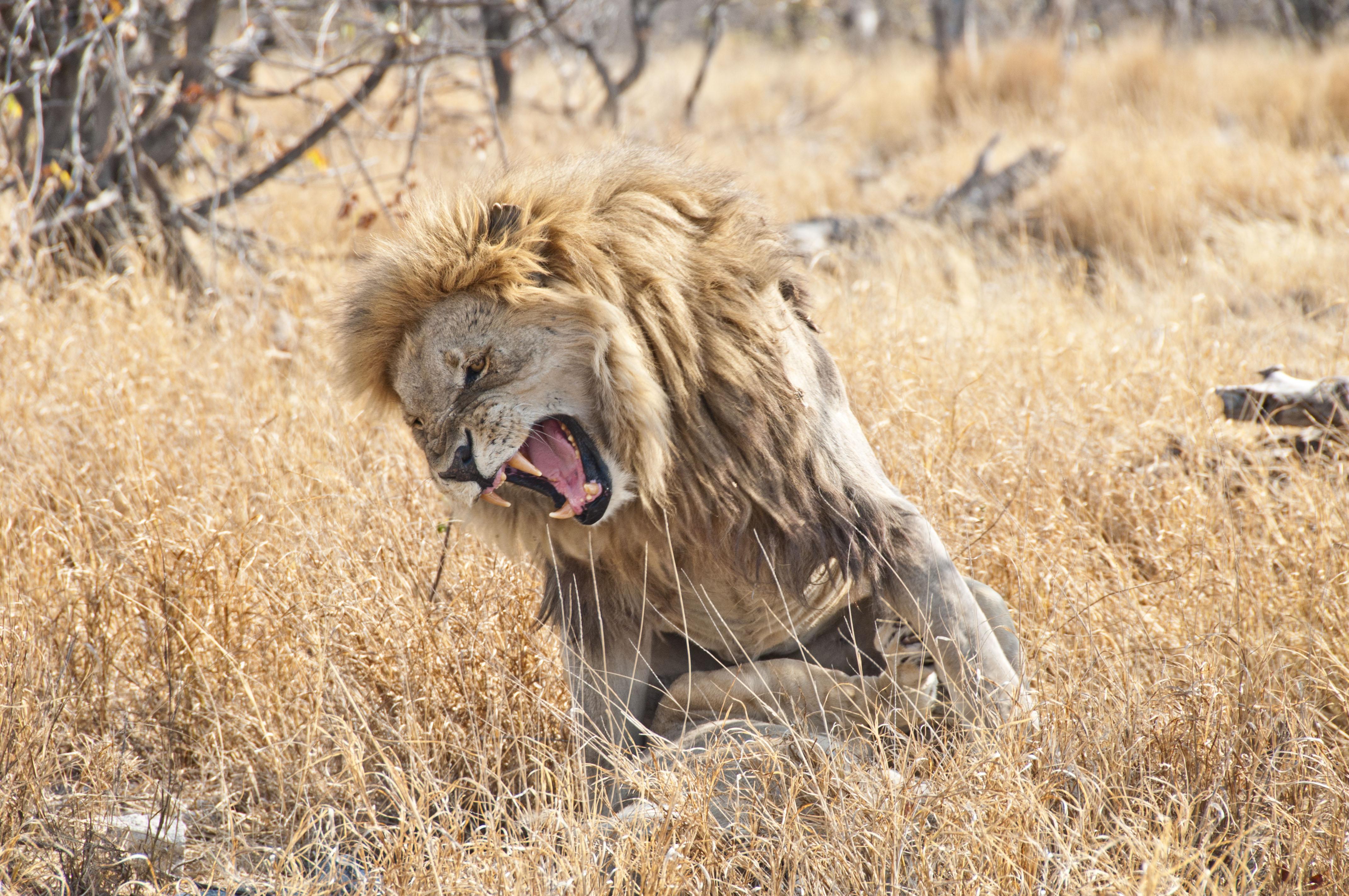 namibia_2014_kaokoveld-etoscha_107