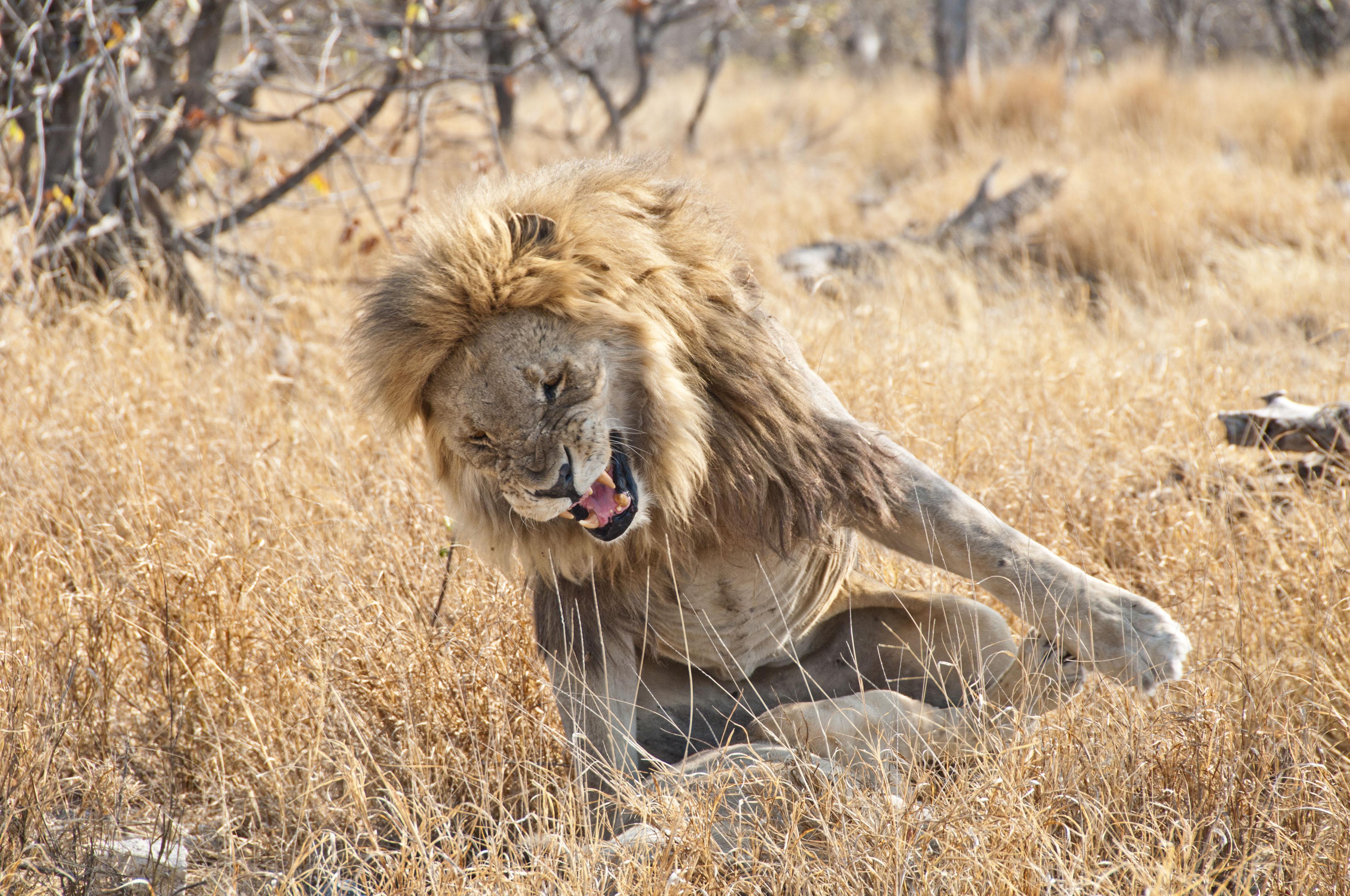 namibia_2014_kaokoveld-etoscha_108