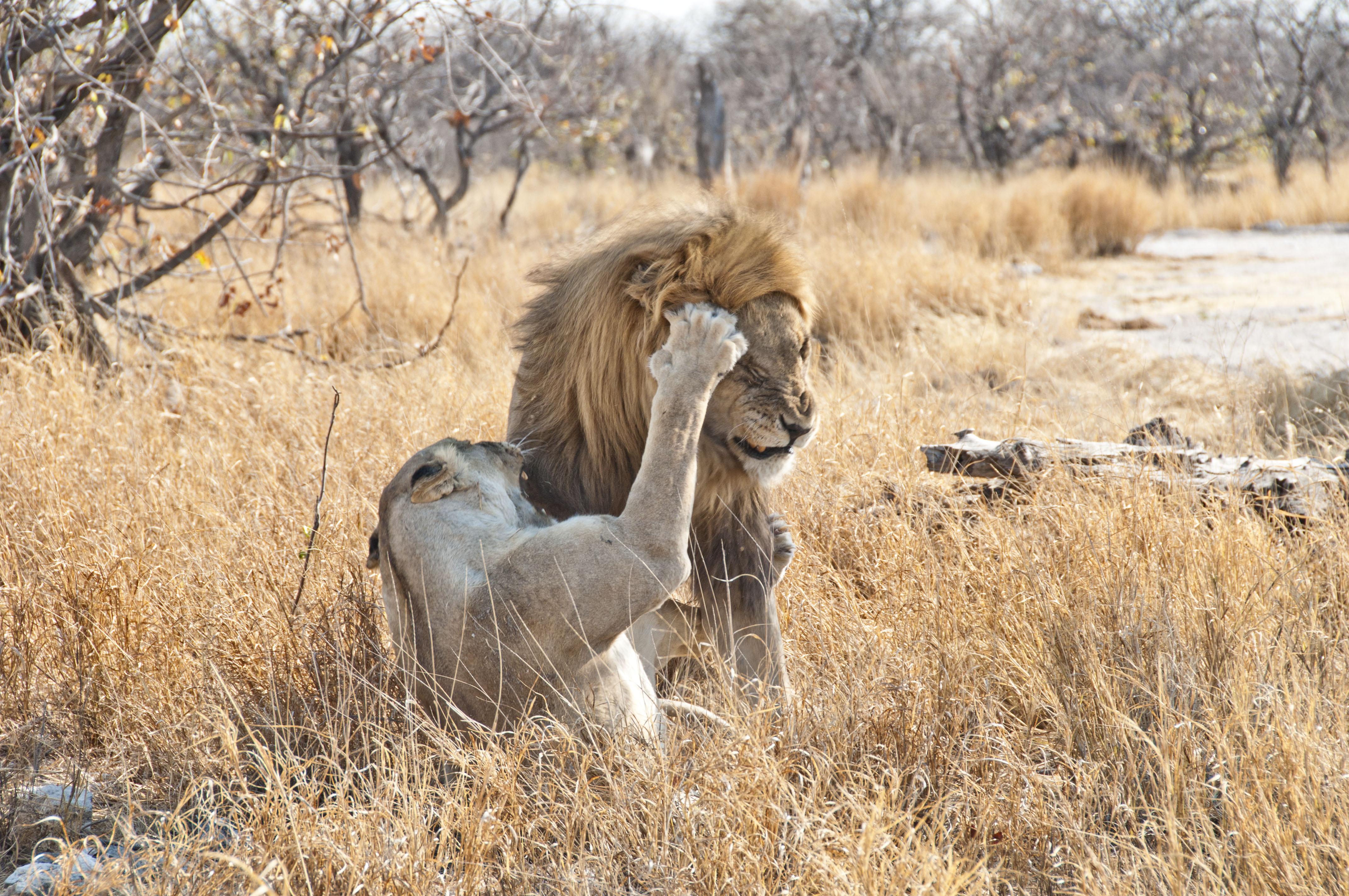 namibia_2014_kaokoveld-etoscha_110