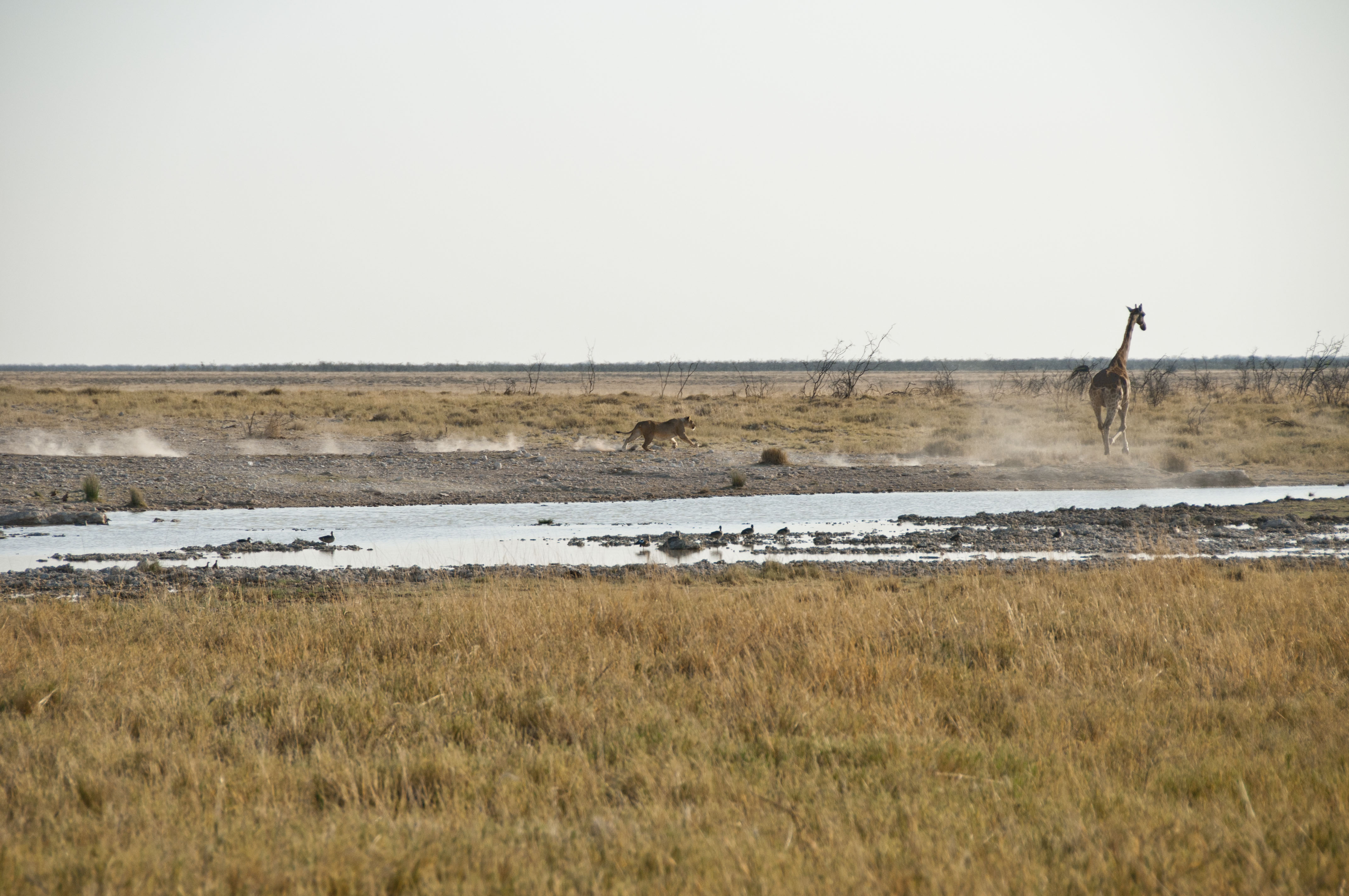 namibia_2014_kaokoveld-etoscha_119