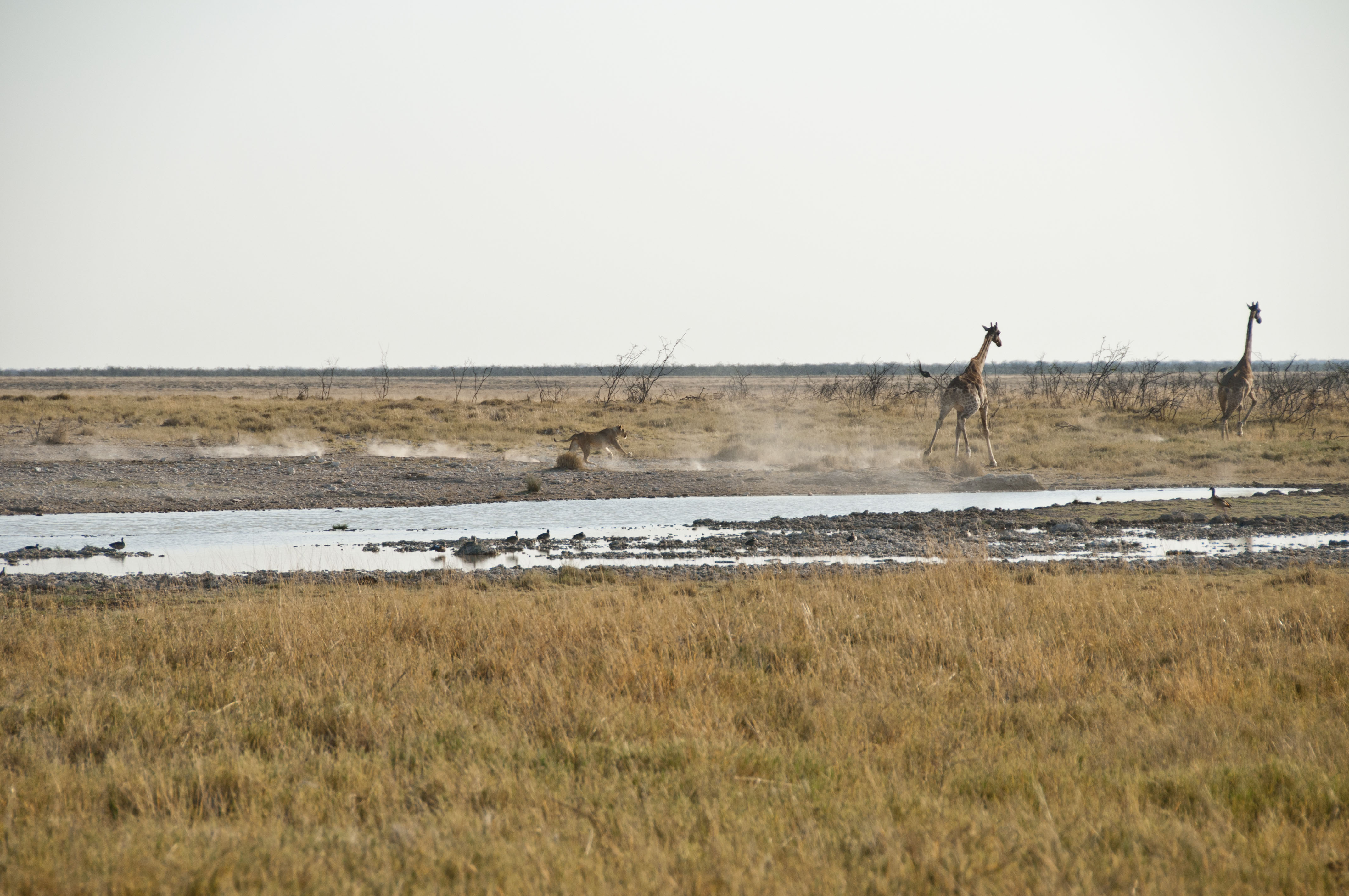 namibia_2014_kaokoveld-etoscha_120