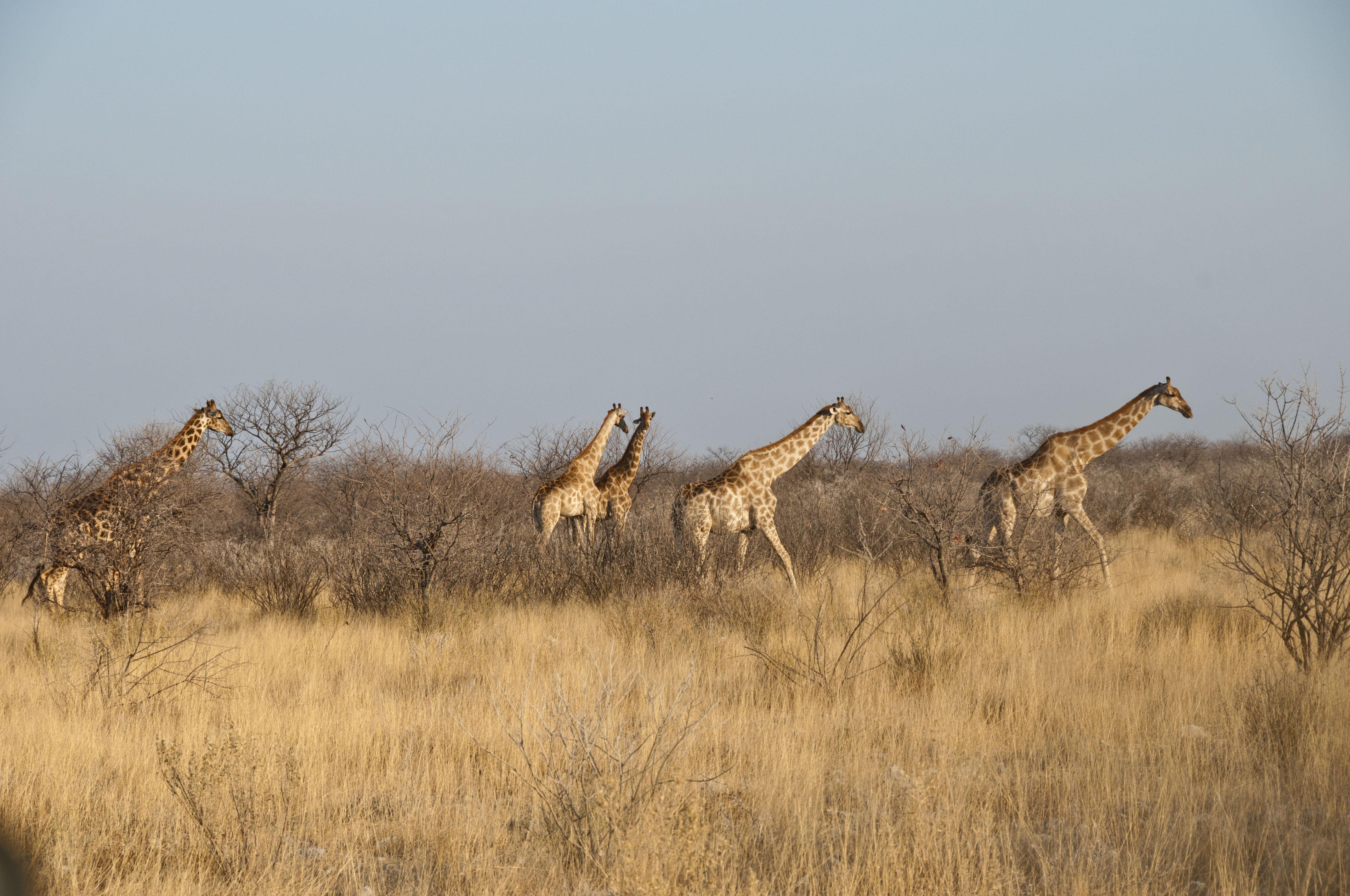 namibia_2014_kaokoveld-etoscha_122