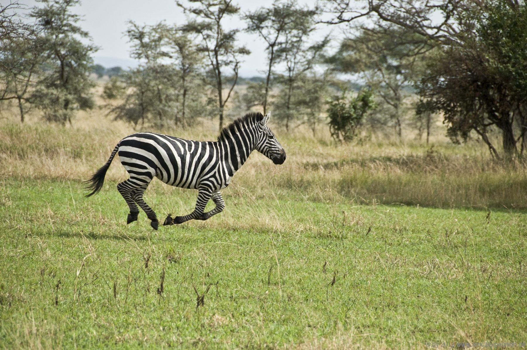 tanzania_africaexpedition_de_007