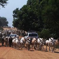 Ein neuer Staat für Afrika